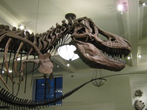 The Museum of Natural History has some great dinosaurs!